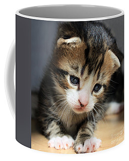 Daydreamer Kitten Coffee Mug