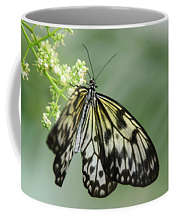 Coffee Mug featuring the photograph Delicate by Tam Ryan