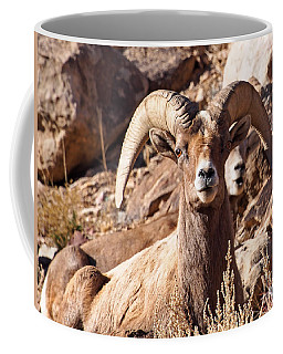 Desert Bighorn Sheep Coffee Mug by Nadja Rider