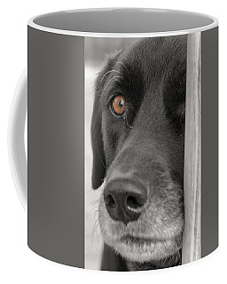Dog Peek A Boo Coffee Mug