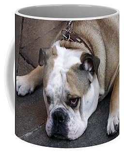 Coffee Mug featuring the photograph Dog. Tired. by Rick Locke