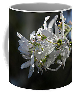 Downy Serviceberry Coffee Mug by William Tanneberger