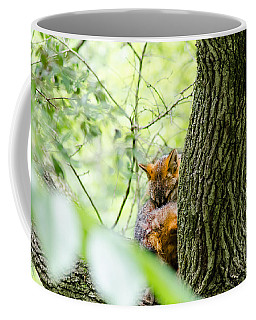 Coffee Mug featuring the photograph Dreaming Above All by Steven Santamour