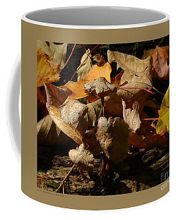 Dried Mushrooms In The Wild Coffee Mug by Patricia Overmoyer