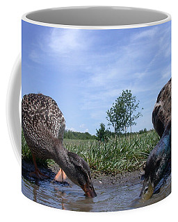 Ducks Eye View Coffee Mug