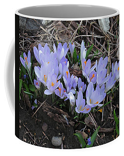 Early Crocuses Coffee Mug