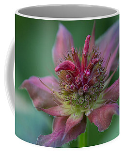 Early Spring Bee Balm Bud Coffee Mug