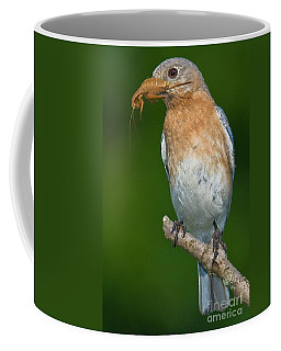 Eastern Bluebird With Katydid Coffee Mug by Jerry Fornarotto