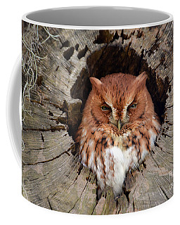 Eastern Screech Owl Coffee Mug