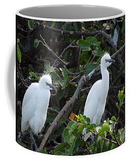 Egret Chicks Waiting To Be Fed Coffee Mug by Ron Davidson