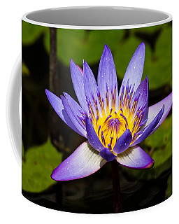 Egyptian Blue Water Lily  Coffee Mug