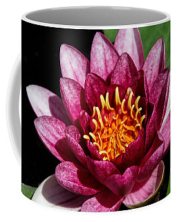 Elegant Lotus Water Lily Coffee Mug