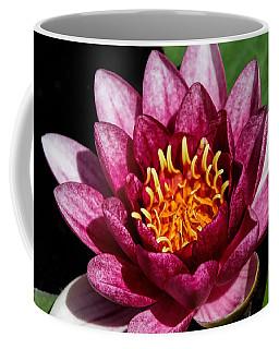 Elegant Lotus Water Lily Coffee Mug by Denyse Duhaime