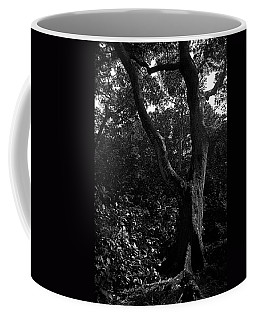 Coffee Mug featuring the photograph Elizabethan Gardens Tree In B And W by Greg Reed