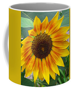 Coffee Mug featuring the photograph End Of Summer Sunflower by Barbara McDevitt