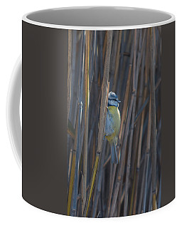 Eurasian Blue Tit - Parus Caeruleus Coffee Mug