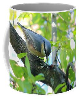 Eurasian Nuthatch - Sitta Europaea Coffee Mug