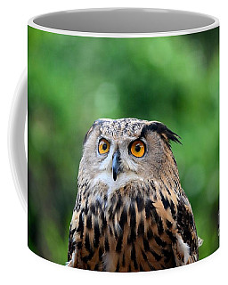 Eurasian Or European Eagle Owl Bubo Bubo Stares Intently Coffee Mug