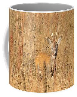 European Roe Deer Coffee Mug