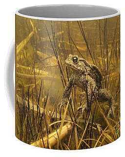 European Toad Noord-holland Netherlands Coffee Mug