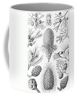 Examples Of Coniferae From Kunstformen Coffee Mug