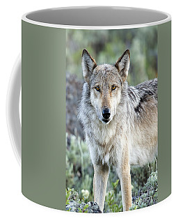 Eye Contact With A Gray Wolf Coffee Mug