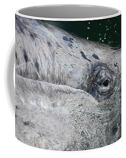 Coffee Mug featuring the photograph Eye Of A Young Gray Whale by Don Schwartz