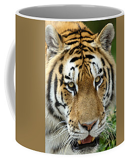 Coffee Mug featuring the photograph Eyes Of The Tiger by John Haldane