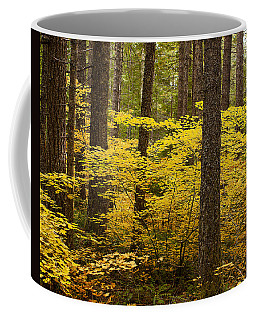 Coffee Mug featuring the photograph Fall Foliage by Belinda Greb