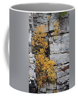Fall Foliage Colors 01 Coffee Mug