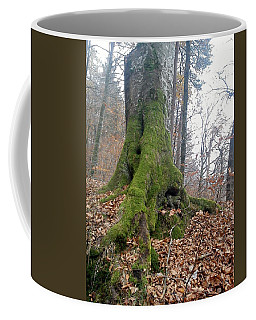 Coffee Mug featuring the photograph Fall In Burgdorf by Felicia Tica