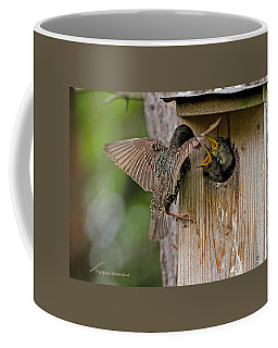 Feeding Starlings Coffee Mug