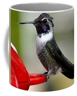 Coffee Mug featuring the photograph Male Anna On Feeder Perch Posing by Jay Milo