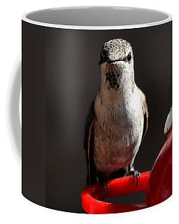 Coffee Mug featuring the photograph Female Anna Hummingbird by Jay Milo