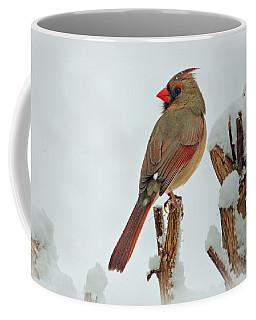 Female Cardinal In The Snow Coffee Mug