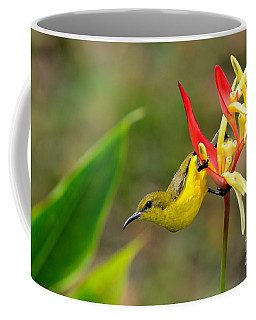Female Olive Backed Sunbird Clings To Heliconia Plant Flower Singapore Coffee Mug