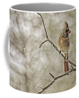 Coffee Mug featuring the photograph Female Redbird by Kenny Francis