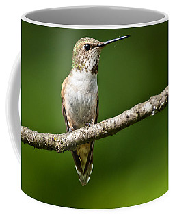 Female Rufous Hummingbird In A Tree Coffee Mug by Jeff Goulden