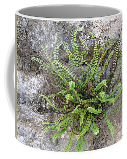 Coffee Mug featuring the photograph Fern Tendrils  by HEVi FineArt