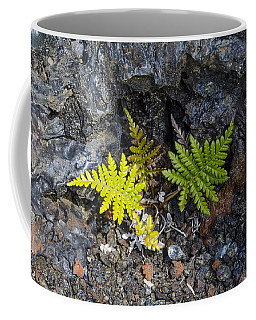 Ferns In Volcanic Rock Coffee Mug