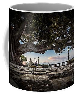 Ficus Magnonioide In The Alameda De Apodaca Cadiz Spain Coffee Mug