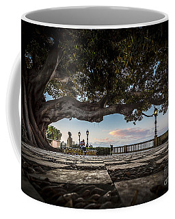 Ficus Magnonioide In The Alameda De Apodaca Cadiz Spain Coffee Mug