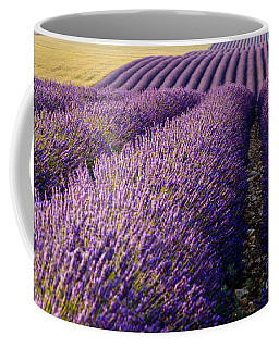 Coffee Mug featuring the photograph Fields Of Lavender by Brian Jannsen