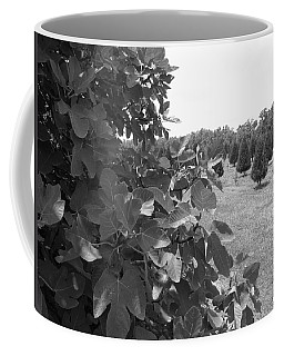 Fig Tree Coffee Mug by Beth Vincent