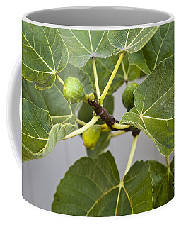 Coffee Mug featuring the photograph Figalicious by David Millenheft