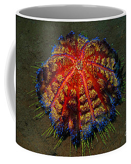 Coffee Mug featuring the photograph Fire Sea Urchin by Sergey Lukashin