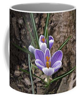 First Crocus Of Spring Coffee Mug
