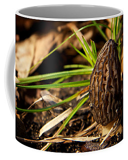 Coffee Mug featuring the photograph First Morel Mushroom Of Spring by Mary Lee Dereske