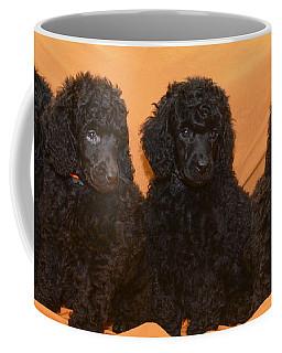 Five Poodle Puppies  Coffee Mug