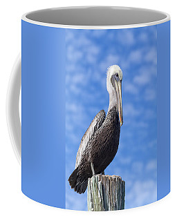 Coffee Mug featuring the photograph Florida Brown Pelican by Kim Hojnacki